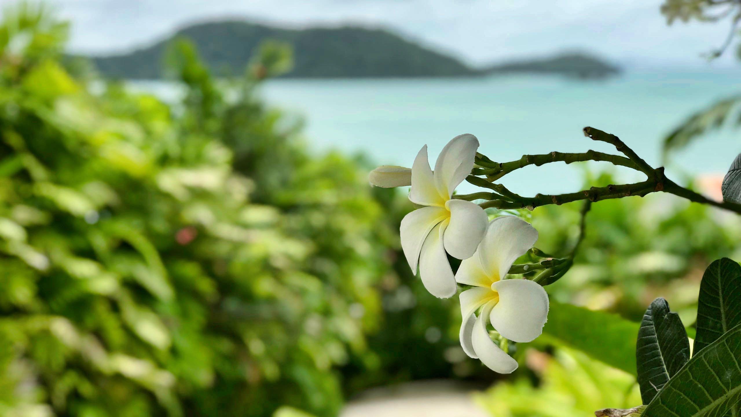 Amatara Wellness Resort Phuket Garten