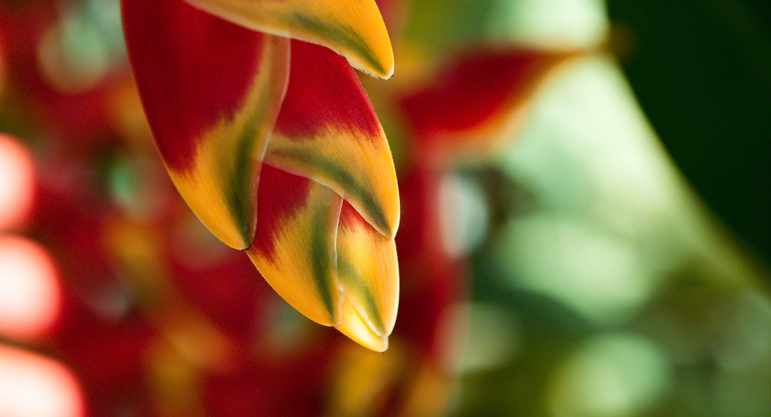 Die natürliche Farbenpracht im Inneren der Insel.