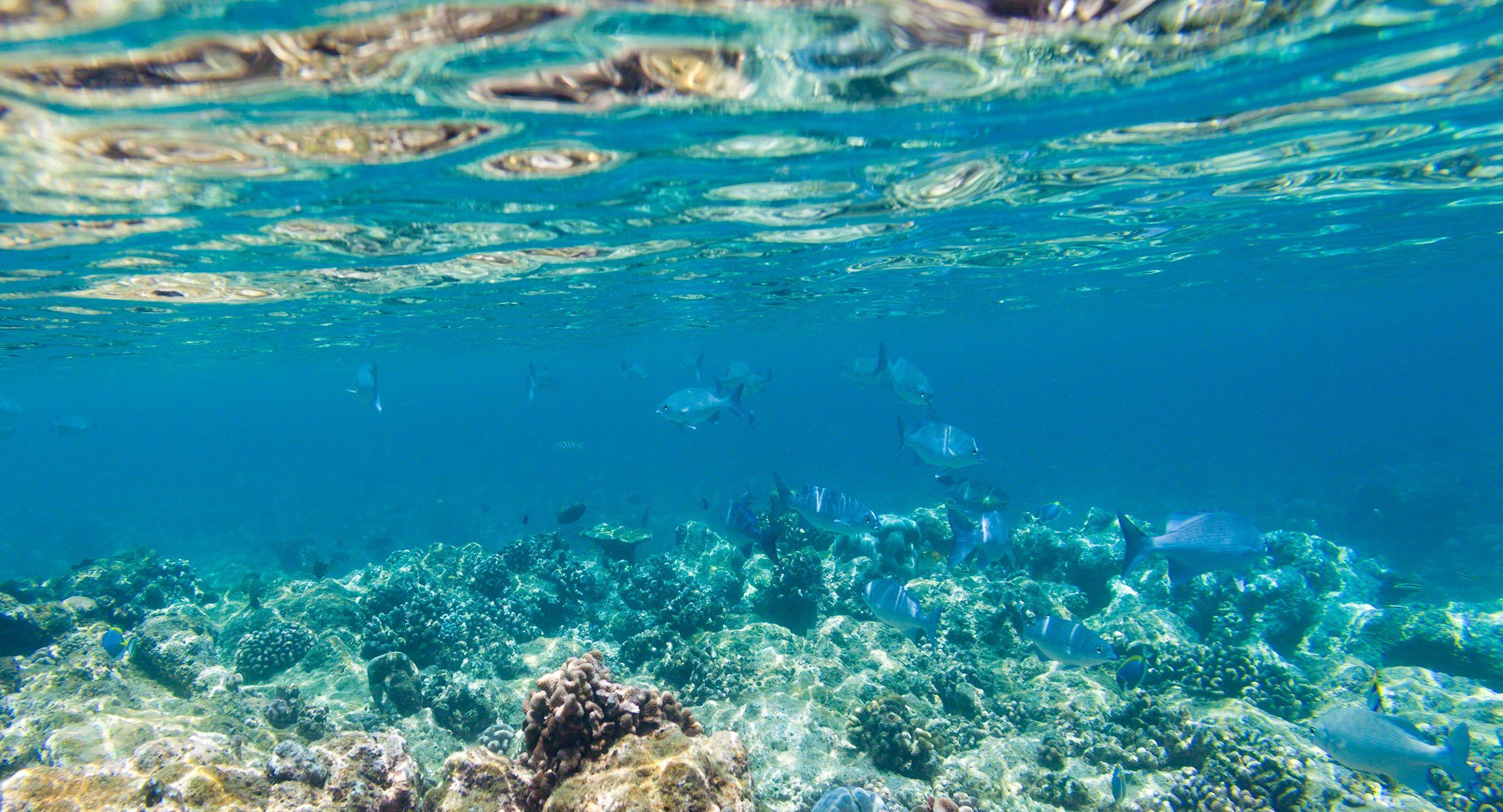 Farbenfrohe Unterwasserwelt auf Kuramathi Island Malediven.