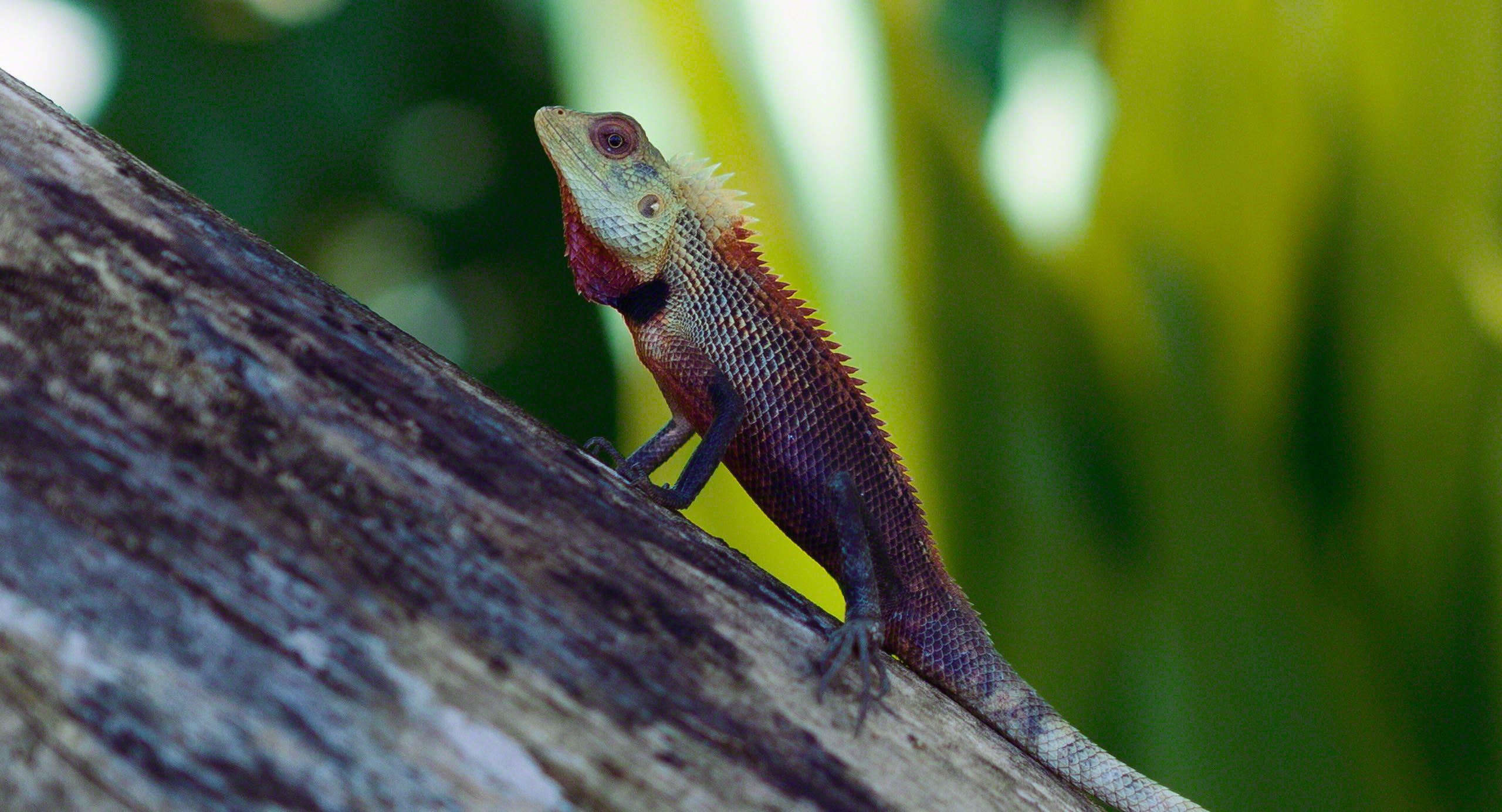 Ein Insel-Naturreich voller farbprächtige Haustiere.