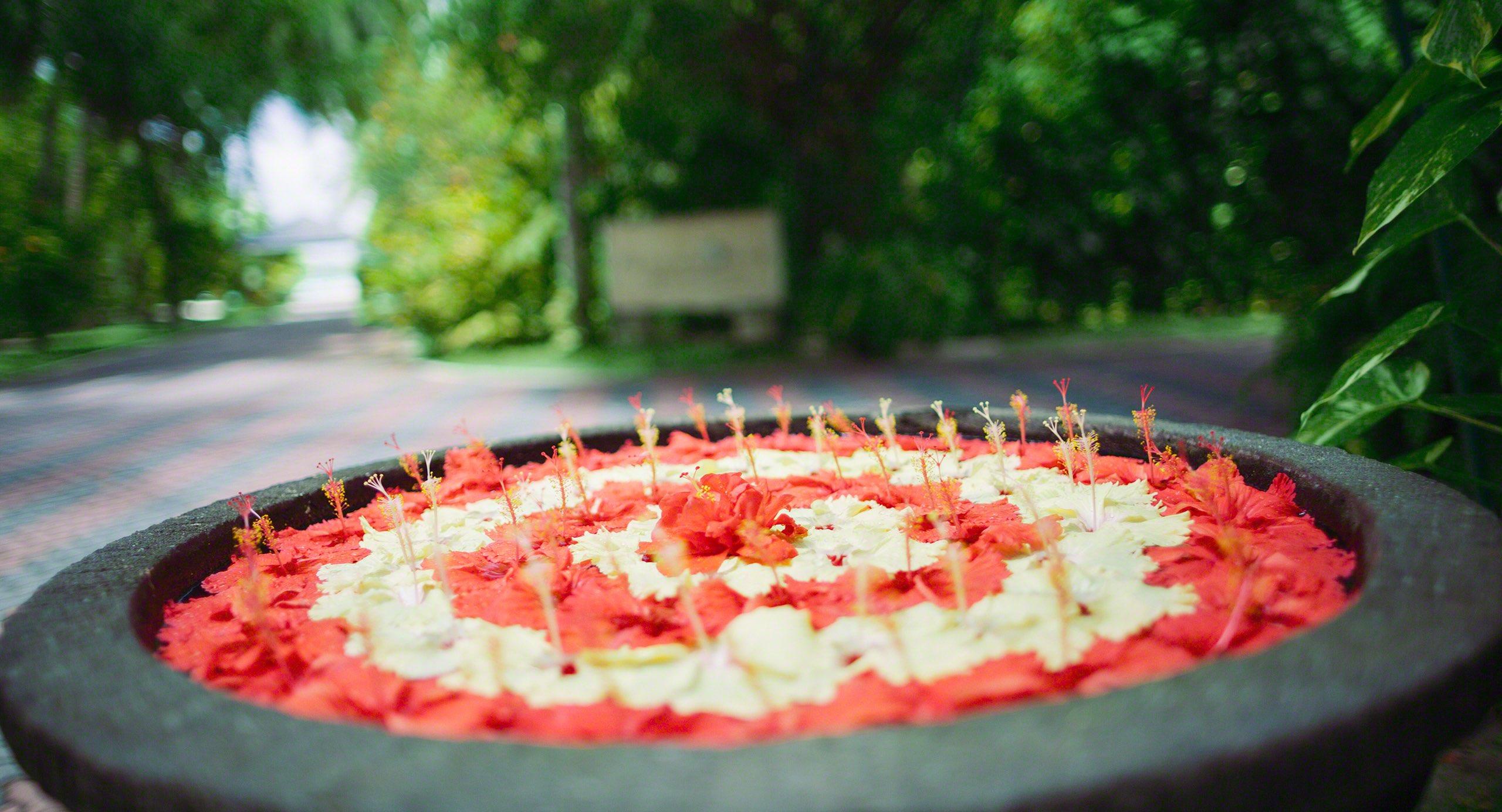Malediven Blütenpracht wohin du auch schaust.