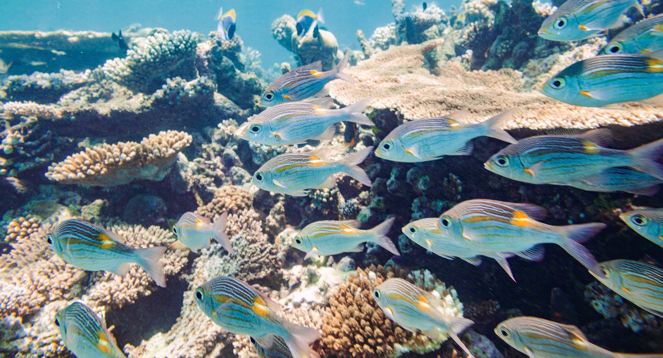 Oder ist es doch am schönsten unter Wasser?