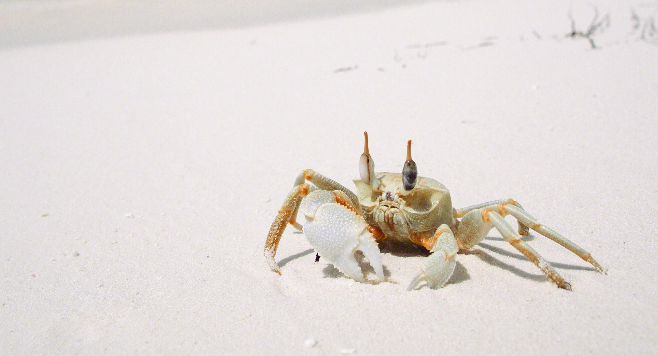 Ja, der Krebs am Strand kann auch kneifen, ganz schön sogar.