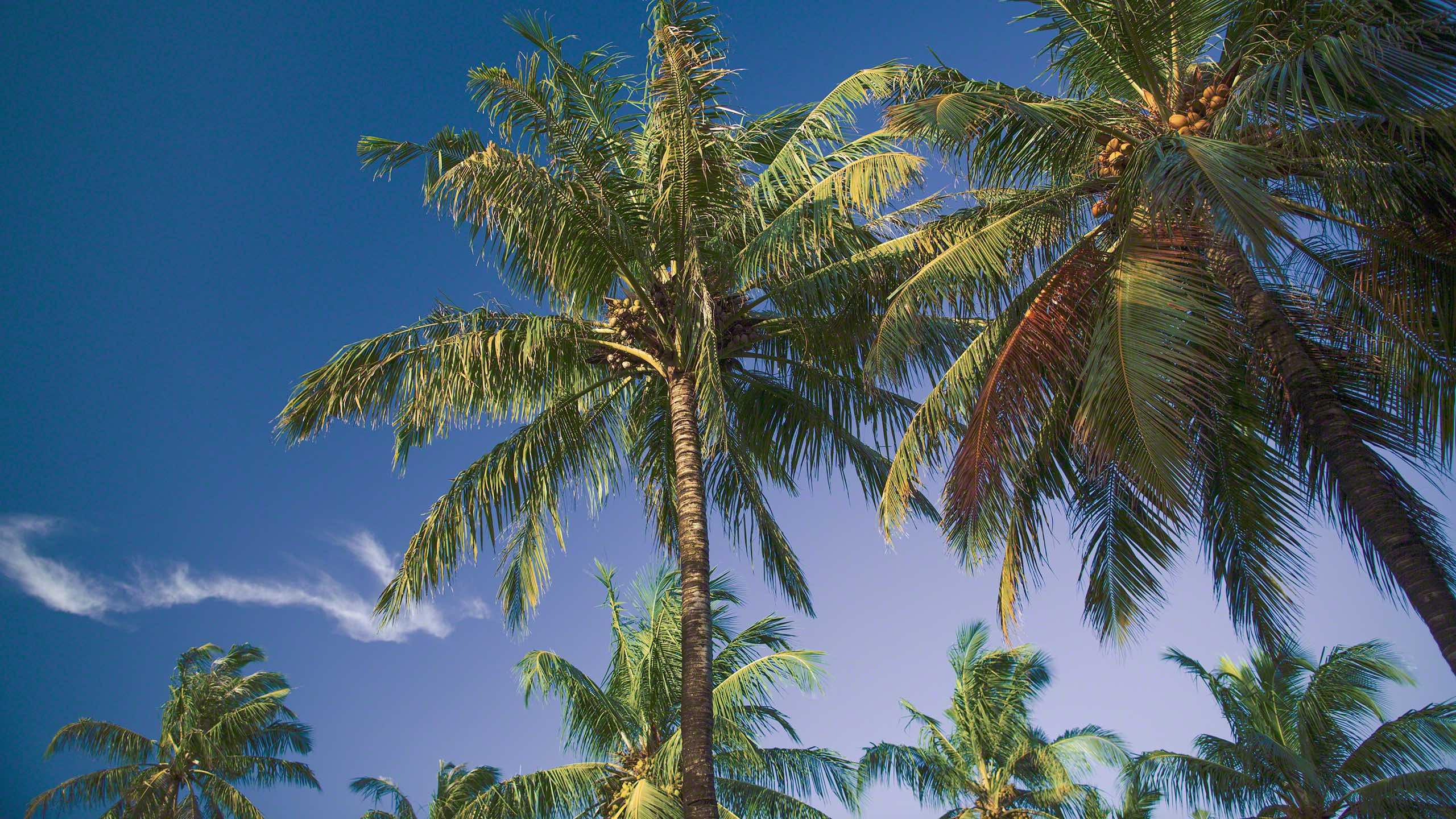 Schattenspendende Palmen gibt es auf der Insel genug