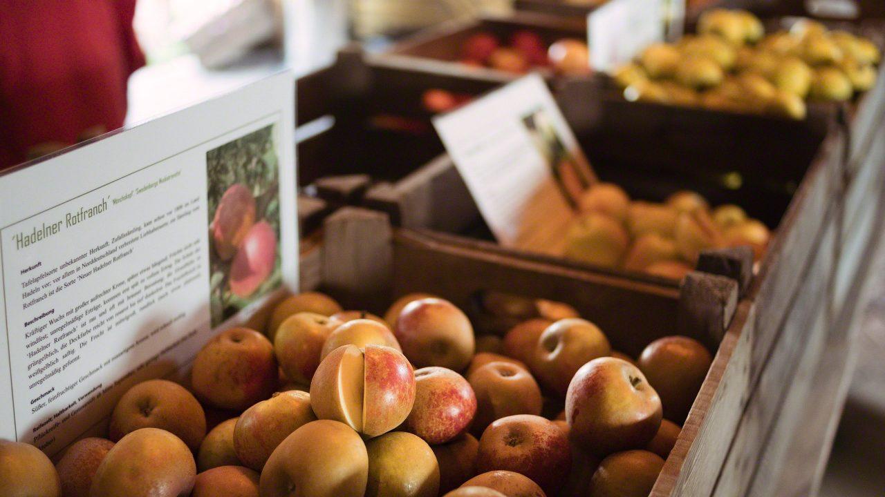 Aromatische, alte Apfelsorten vom Bioland-Hof Altendorfer Apfelei im Alten Land.Der alte Apfelgarten vom Bioland-Hof Altendorfer Apfelei im Alten Land.