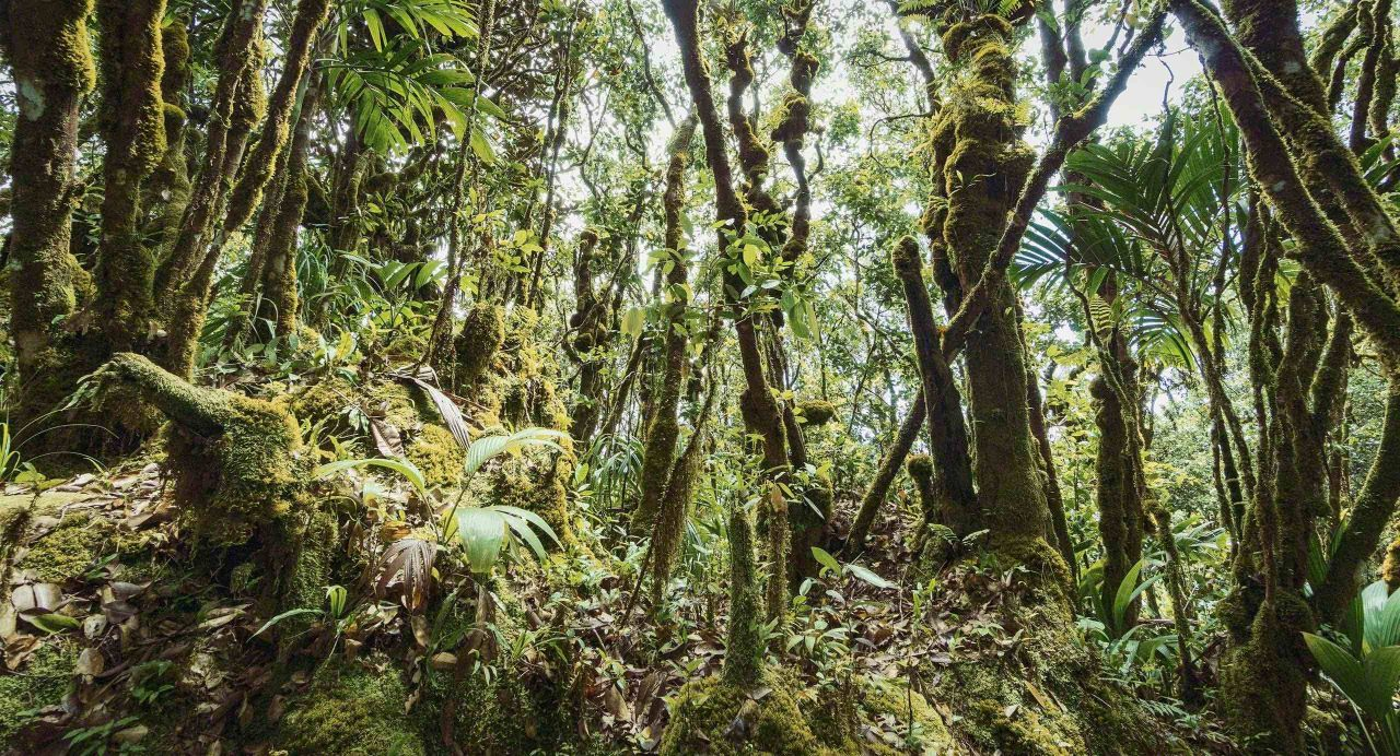 Seychellen Morne Seychellois Urwald © Mirco Seyfert
