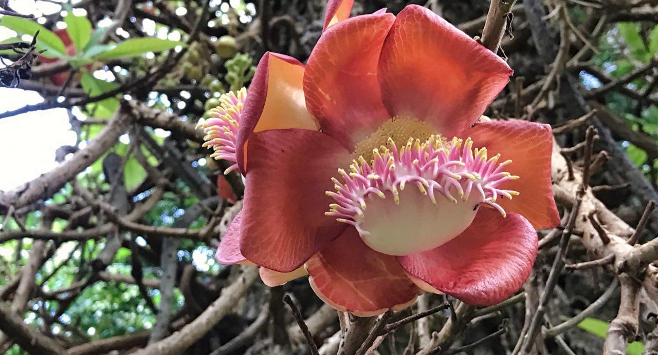 Mont Fleuri - Botanischer Garten, Seychellen.
