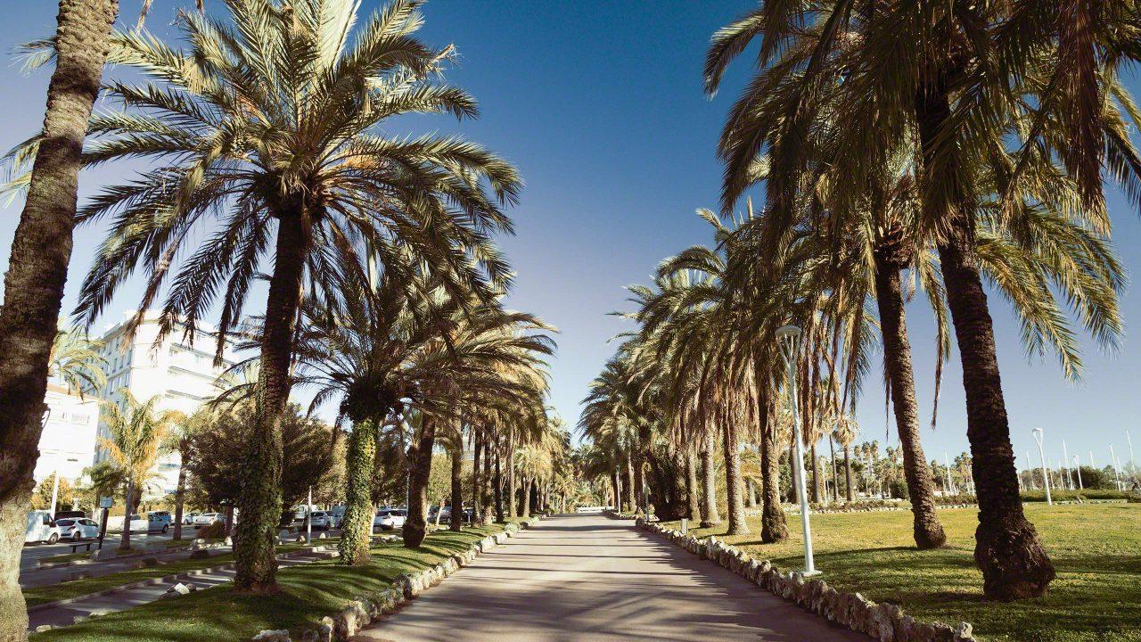 Côte d'Azur: Der drei Kilometer lange, palmenumsäumte Urlaubstraum an der Croisette in Cannes. ©Mirco Seyfert