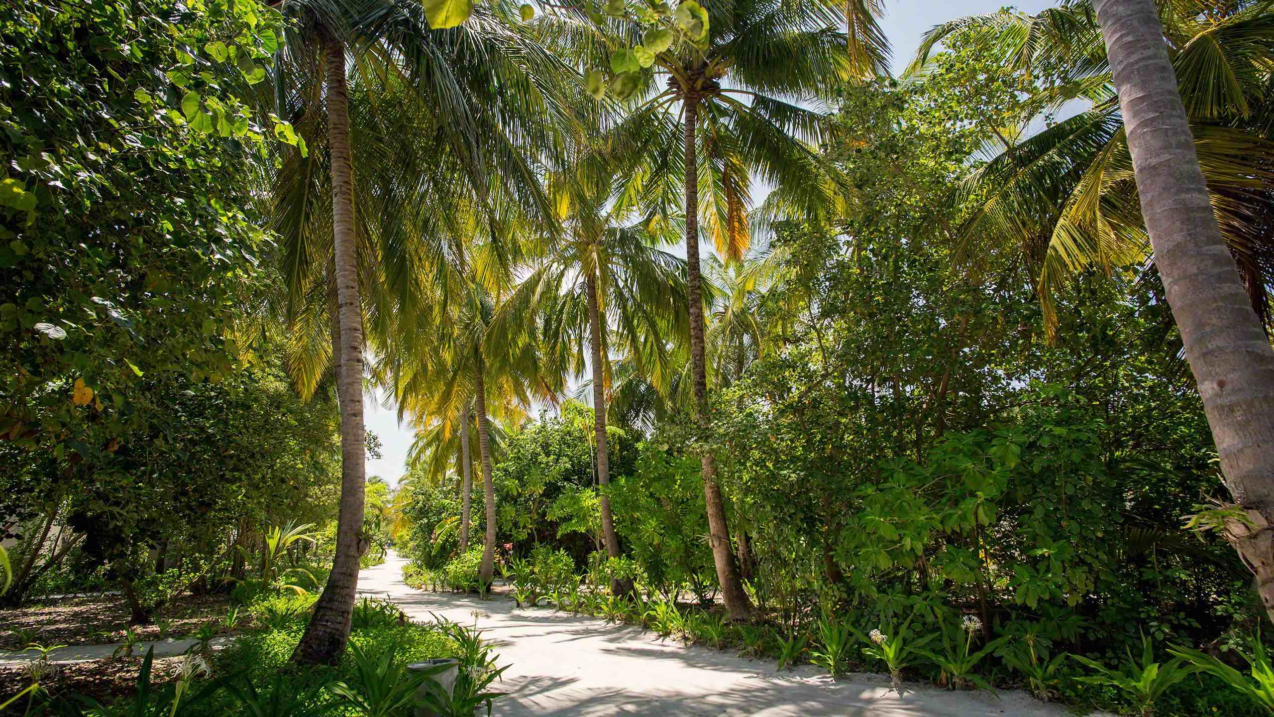 Der Urwald in der Inselmitte, ein tropischer Urlaubstraum ©Mirco Seyfert