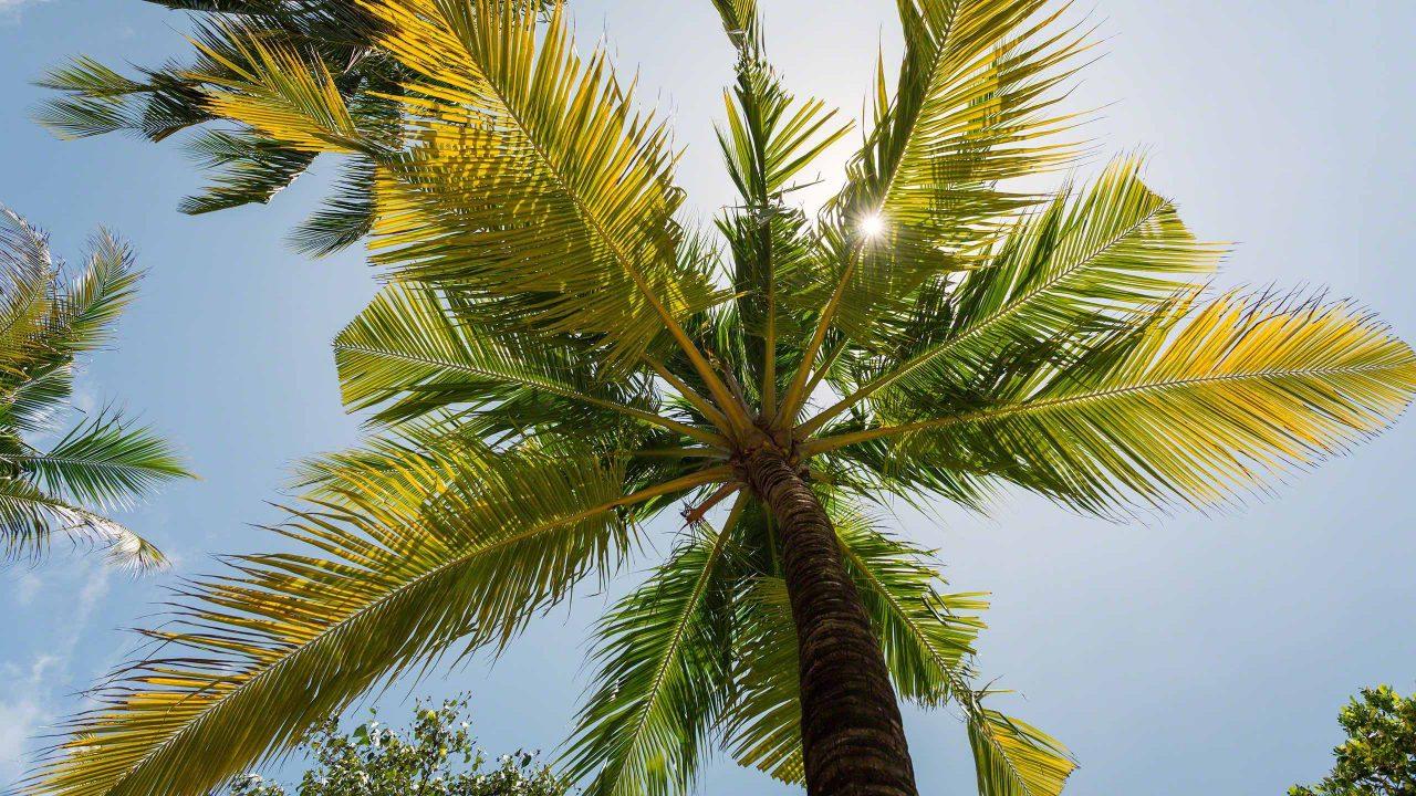 Typisch für die Malediven, ohne Palme kein Malediven Idyll ©Mirco Seyfert