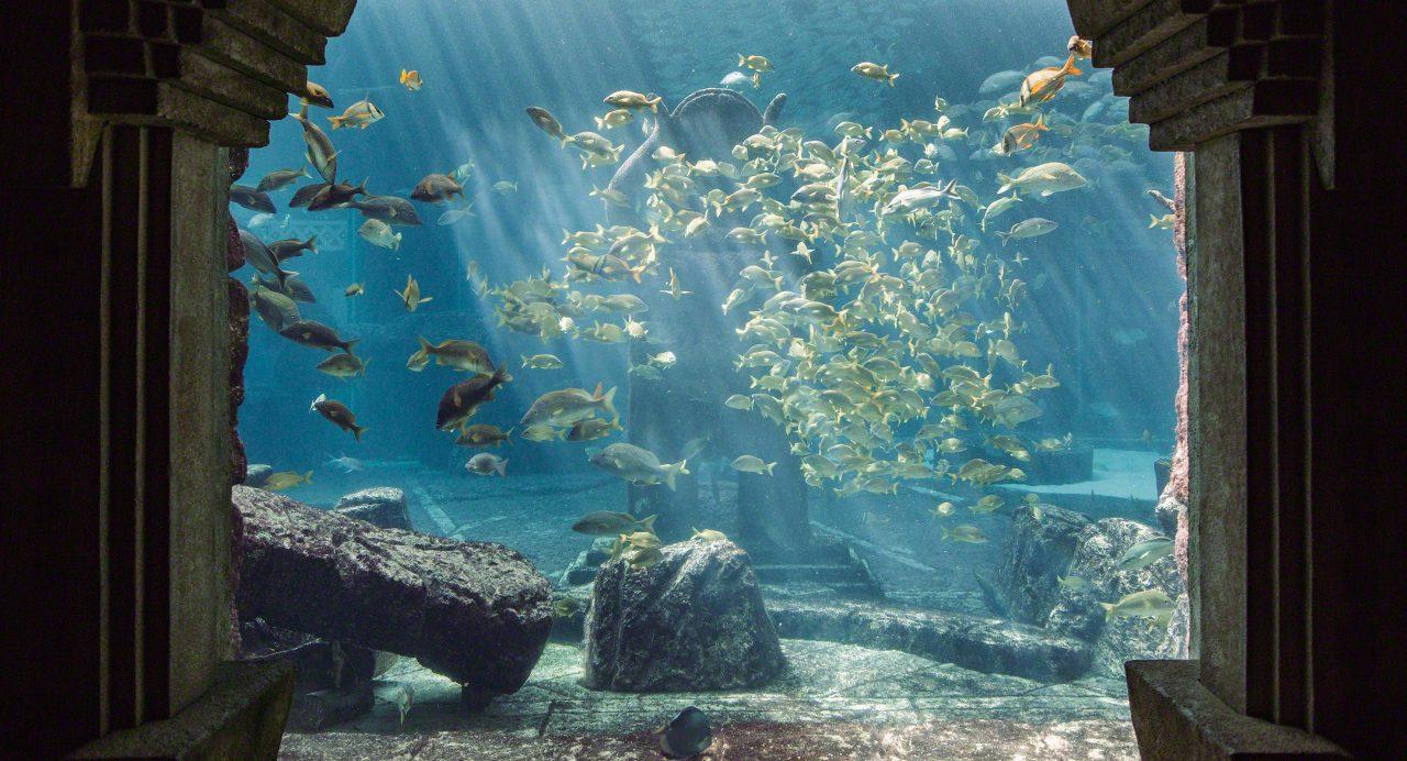 Bahamas: Atlantis Resort Fisch-Aquarien © Mirco Seyfert