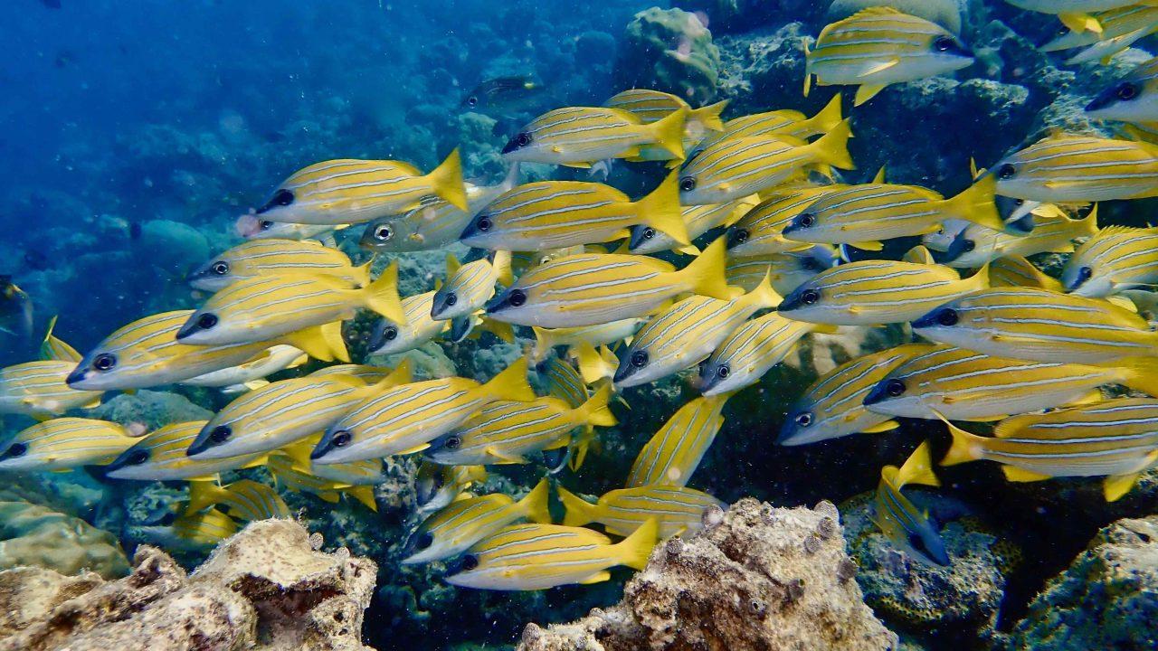 Faszinierende Einblicke in die bunter Unterwasserwelt - im Hausriff.