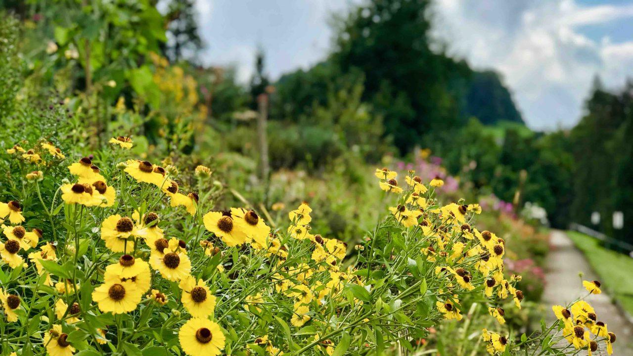 An idyllischen Gärten vorbei führt der blühende Weg zu den Weihern.