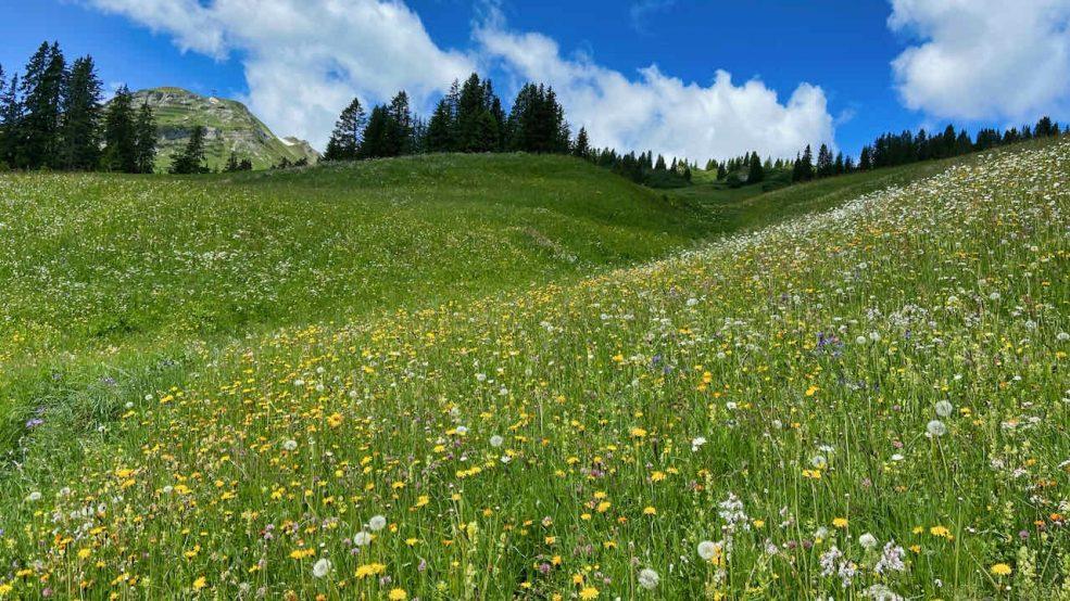 Lech am Arlberg Aurelio Chalet Luxushotel Reisetipps Wanderung blühende Wiesen